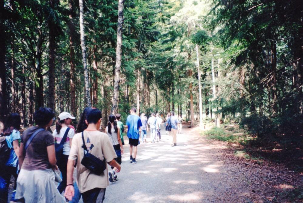 Βαυαρικό Δάσος021