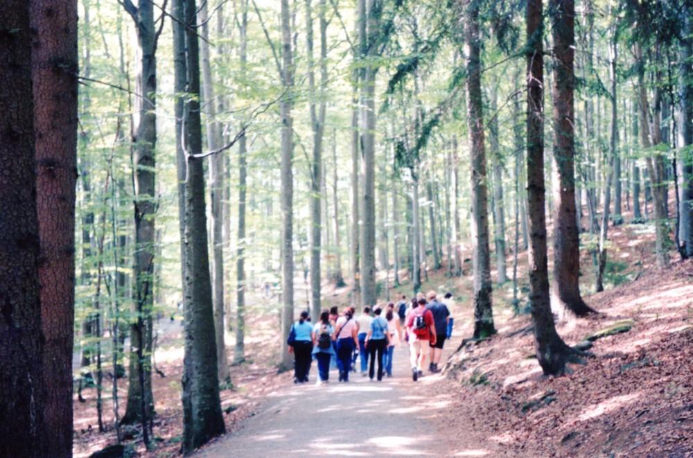Βαυαρικό Δάσος023